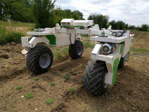 dino-de-naio-le-robot-pour-desherber-10-ha-et-plus-de-legumes